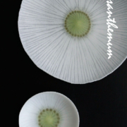 薄皿・菊・白15.5cm・d.Tam
