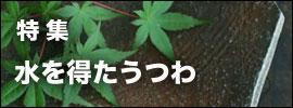 正木春蔵焼き締め