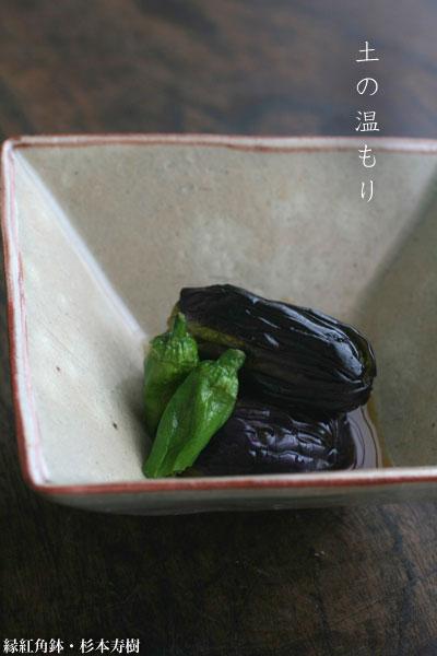 縁紅角鉢・杉本寿樹